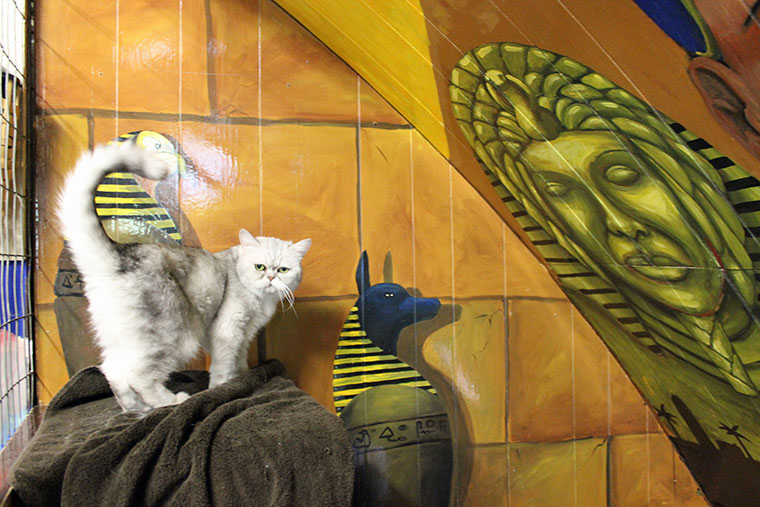 Egyptian Suite cat hotel